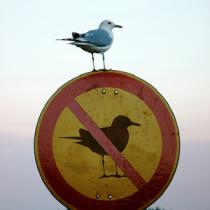 prohibido_prohibir